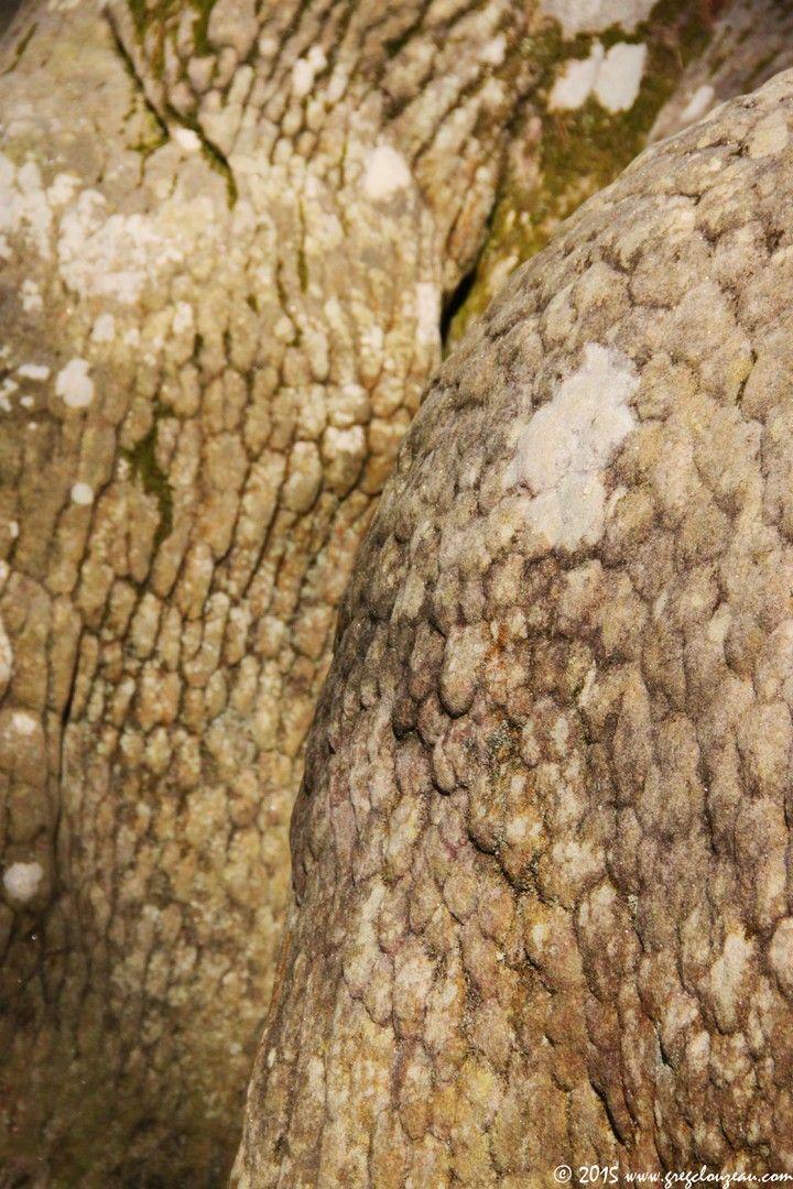 desquamations polygonales des grès de Fontainebleau, Apremont Dames, (C) 2015 Greg Clouzeau
