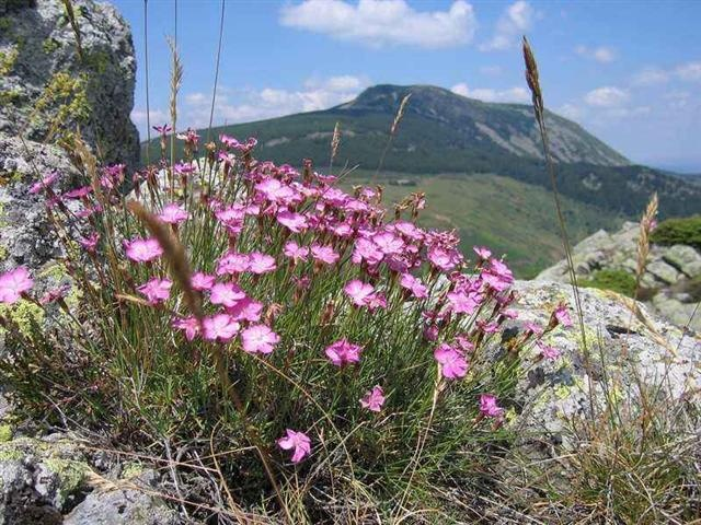 High Point Holidays - Independent Walking Holiday in Haute Loire, Auvergne, France