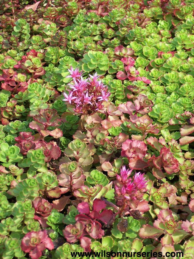 Shade Garden Ideas Front Yards Perennials