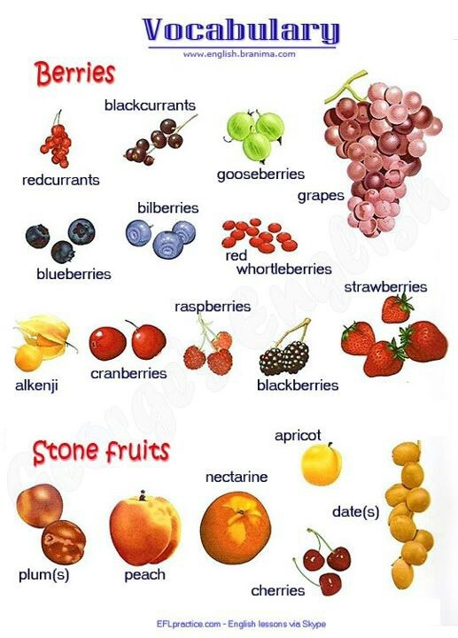English Vocabulary Chart for BERRIES and STONE FRUITS.