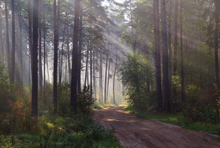 Волшебный лес...