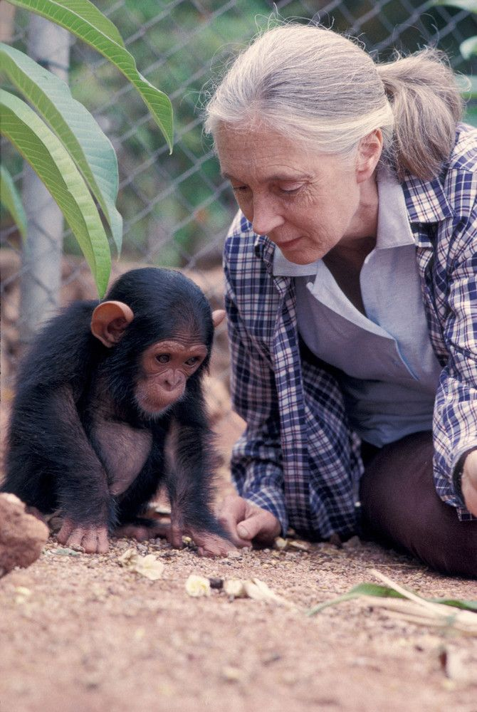 Jane Goodall ~ And An Infant Chimp.