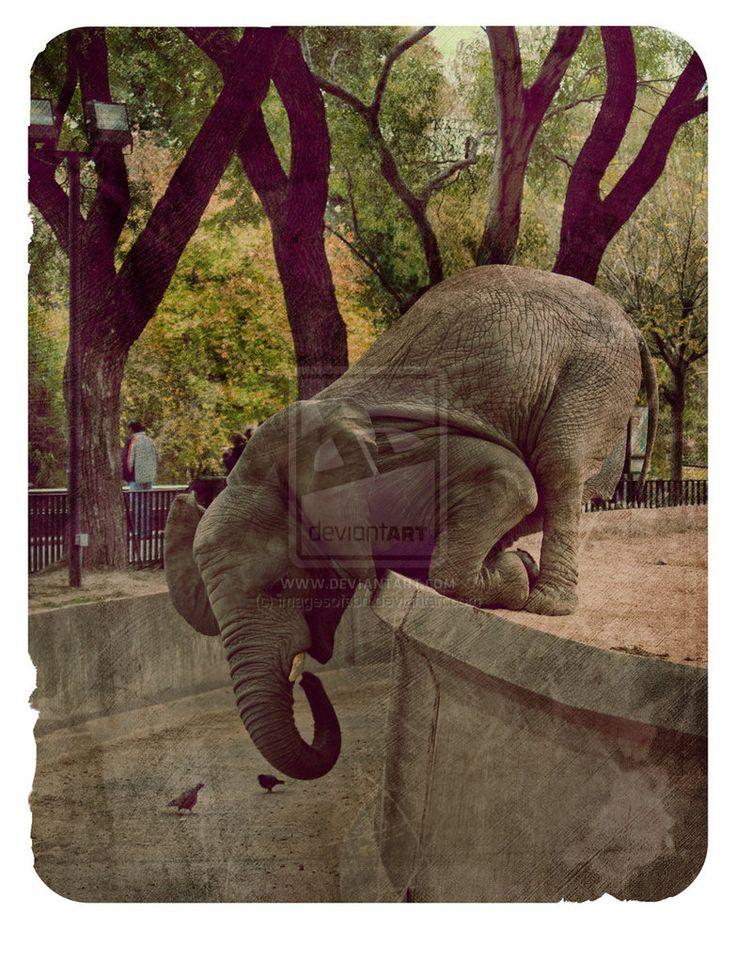 mvs2___kneeling_elephant_by_imagesofsbn.jpg (783×1021)