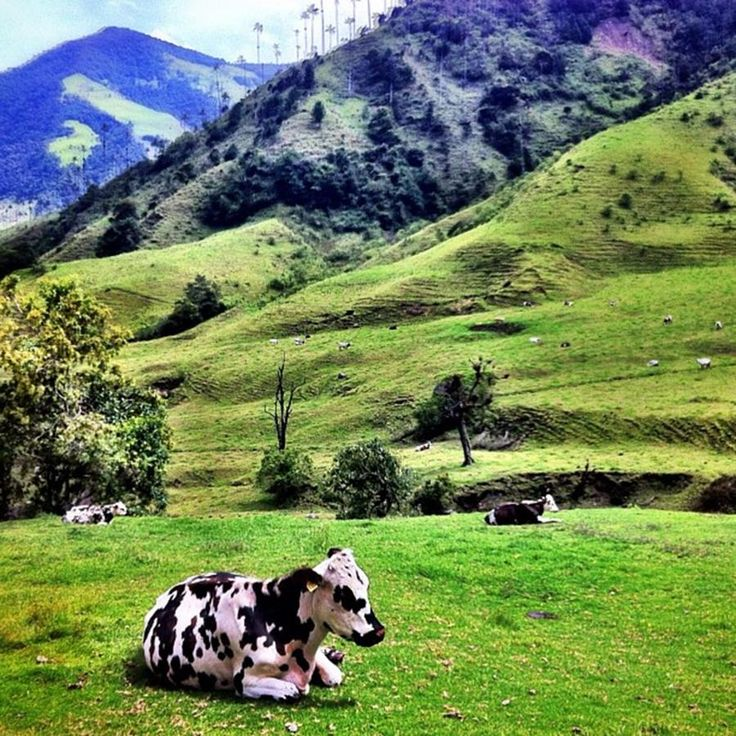 "salento+colombia | tierra Magia"" ~ Salento, Colombia Photograph"