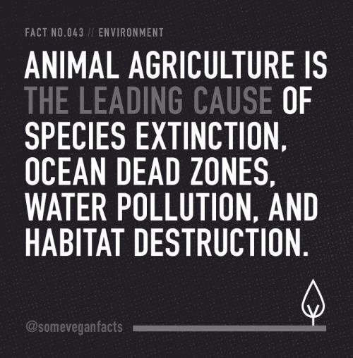 Fact 043. Animal agriculture is the leading cause of species extinction, ocean dead zones, water pollution, and habitat destruction. Source // http://www.cowspiracy.com/facts/