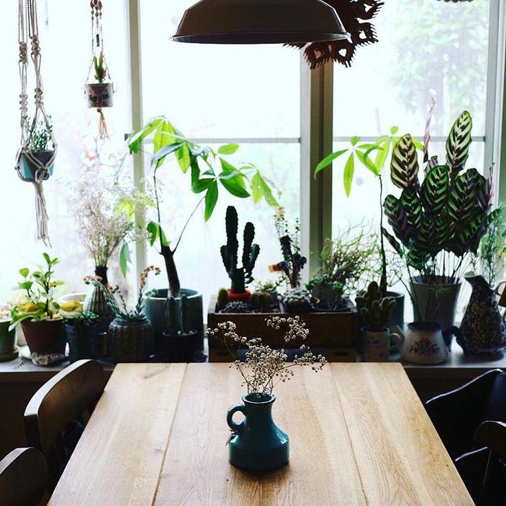 .  おはようございます☺︎  .  今朝は、早起きしてお弁当作り。  友人家族とピクニックの予定です。  .  外がだんだん明るくなってくるのを、ここで眺めるのが大好きな時間です。  .  #livingroom #living #リビングインテリア #リビング#リビングダイニング #インテリア#interior#homedecor #ビンテージ#ヴィンテージ#北欧#北欧インテリア#北欧雑貨 #北欧食器#北欧好き #oma#oma_zakka #ライフスタイルショップ #観葉植物#観葉植物インテリア#グリーンのある暮らし#サボテン#緑のある暮らし #花のある暮らし #暮らし#日々の暮らし#出窓#green#greeninterior#mygoodroom