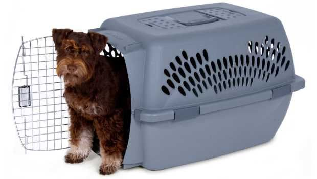 Five Best Dog Travel Crates for Long Trips - Top Dog Tips