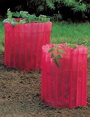 Going to try these this year.  See if I can get tomatoes earlier then July.