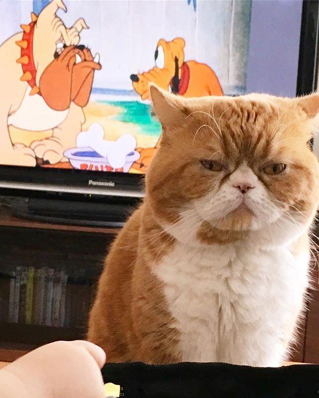 🐶 and 🐱 and 👶🏻 🍼 XX. 🤭💭💭 . . . . . . #exoticshorthair #cat #cats #catlovers #catsofinstagram #catlife #catstagram #ilovecat #cutecats #instagood #instacat #kitty #gato #meow #chat #ふわもこ部 #エキゾチックショートヘア #猫 #ねこ部 #猫との暮らし #猫のいる暮らし #にゃんこ #愛猫 #かわいい #なでなでしたい #🐈 #赤ちゃんと猫