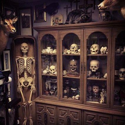 Cabinet de curiosit cabinet de curiosit s pinterest placards - Cabinet de curiosite forum ...