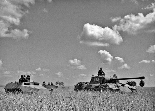"""The personnel and equipment of the Mühlenkamp Combat Team (Kampfgruppe Mühlenkamp) of the 5th Panzer Division of the SS Viking (WSS) during the fighting in the Vilanovo village, eastern Poland, during attempts to deter the Red Army's advance in Operation Bagration. The personnel are moved in Sd.Kfz armored personnel carriers. 251. In the frame of the tank """"Panther"""" Pz.Kpfw. V. Ausf. A with tactical number 533. Category: Panther, German ground troops, Poland 1944"""