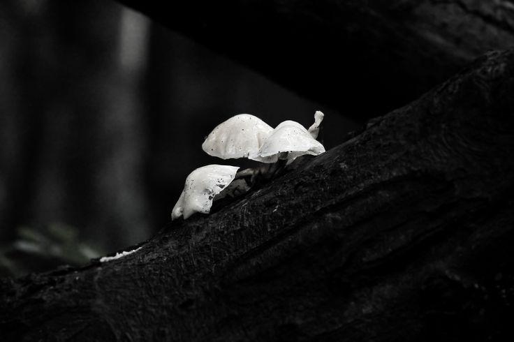 3 White Mushrooms by Nikolaj Hansen on 500px