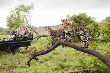 Diez viajes emocionantes para ver animales salvajes | El Viajero | EL PAÍS
