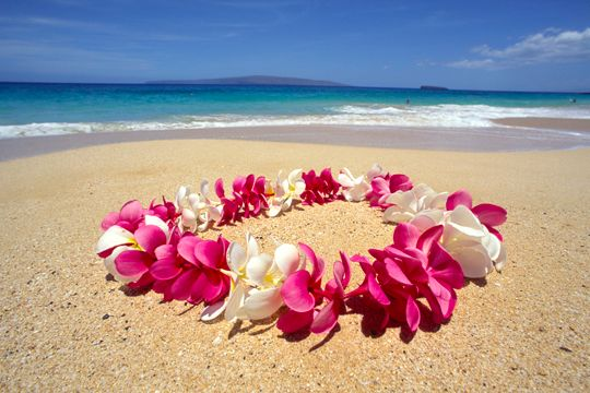 Maui Pictures - Flower Lei Greetings - The fragrant island Plumeria is used to construct Hawaii's standard flower-lei greeting.The tender and beautiful lei is carefully made by hand - weaving fragrant and colorful flowers and leaves together to create a work of art. Leis are worn on all special occasions and given to family and friends as gifts of love. The Lei is a symbol of Hawaii.