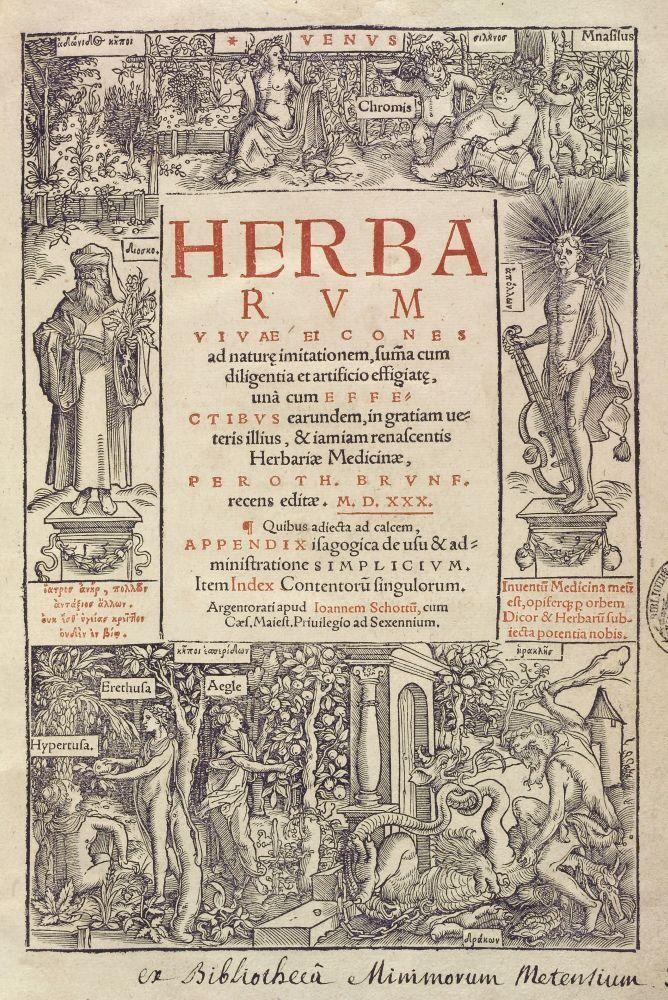 Herbarum vivae eicones, Otto Brunfels. Strasbourg : Johannes Schott, 1530.
