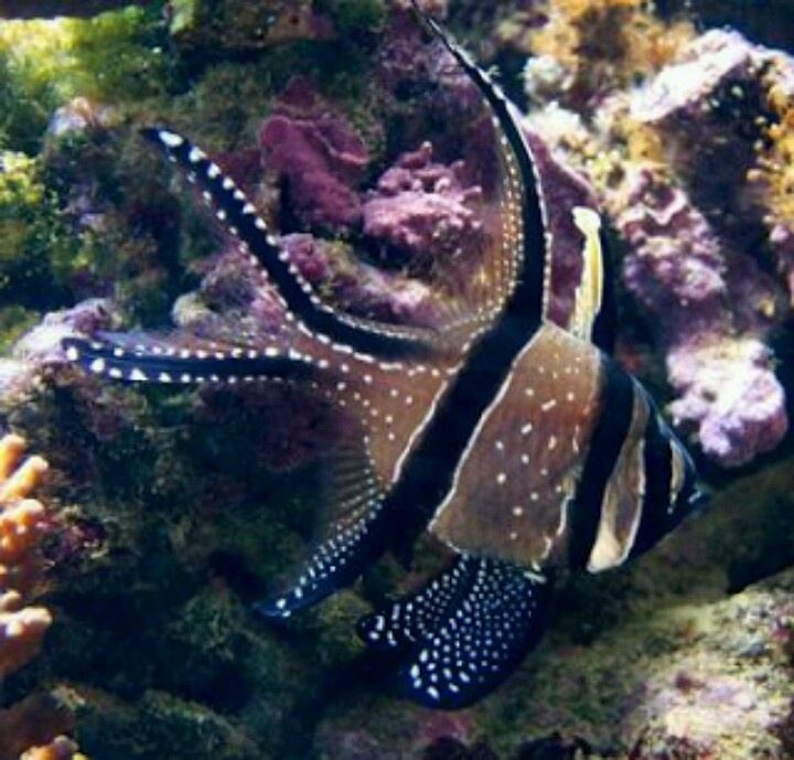 7 best images about Exotic Saltwater Fish on Pinterest ...