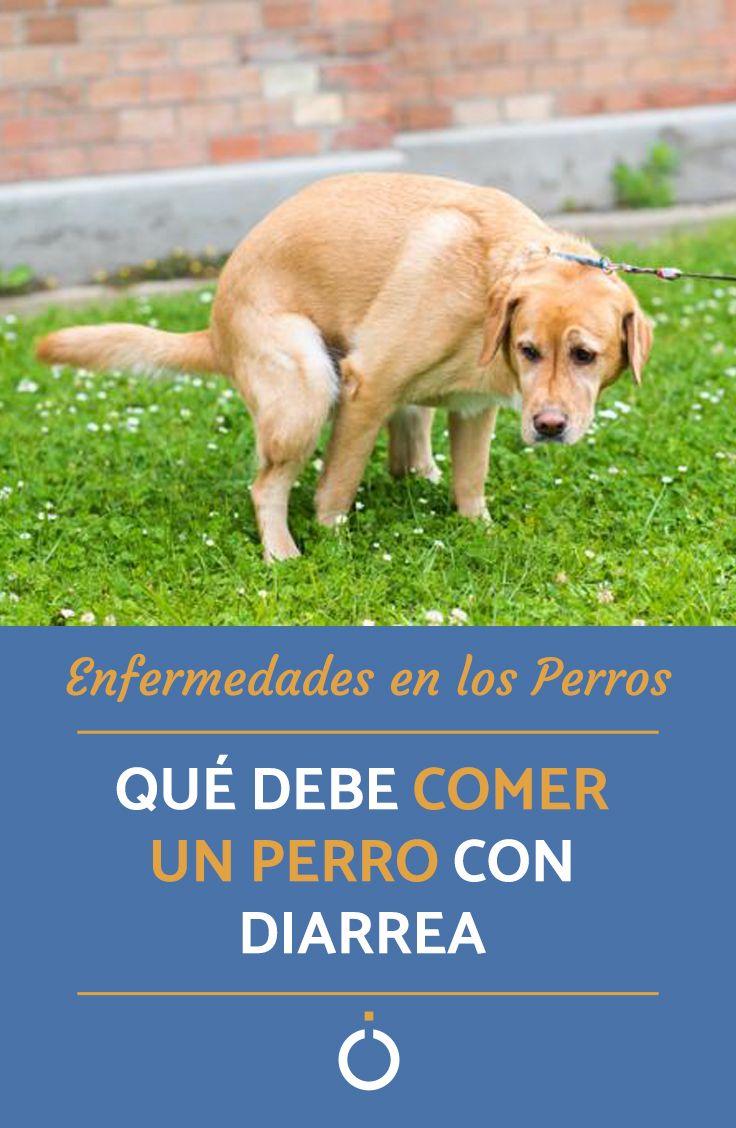 Pin En Uncomo Perros