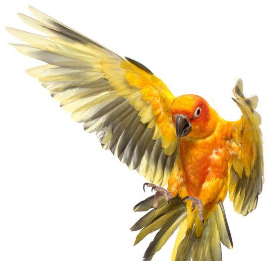 Andrew Zuckerman #photography #parrot