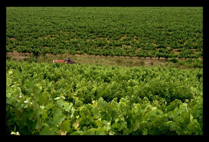 Tractor - Stellenbosch, South Africa - Maura Gramzinski
