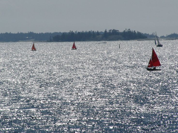 The red sails of the Mirror Dinghy's afternoon  sail.  They've been staying at Harold's Point every August for as long as I can remember