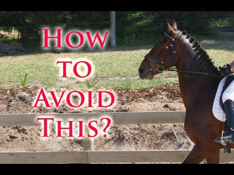 Get My Horse Forward Without the Head Lifting - Dressage Mastery TV Ep5 - YouTube