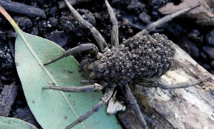 VIDEO. Australie – Arachnophobie : Quand des millions d' araignées tombent du ciel - 20/05/2015 - http://www.camerpost.com/video-australie-arachnophobie-quand-des-millions-d-araignees-tombent-du-ciel-20052015/?utm_source=PN&utm_medium=CAMER+POST&utm_campaign=SNAP%2Bfrom%2BCamer+Post