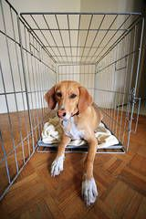 how to crate train your puppy/dog