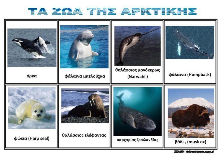 Το νέο νηπιαγωγείο που ονειρεύομαι : Τα ζώα της Αρκτικής - Πίνακες αναφοράς