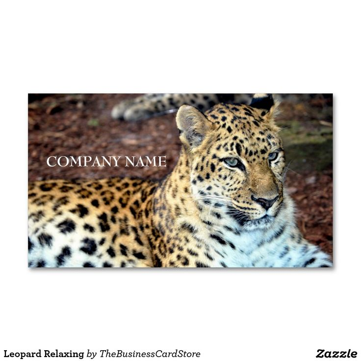 Leopard Relaxing Double-Sided Standard Business Cards (Pack Of 100 ...