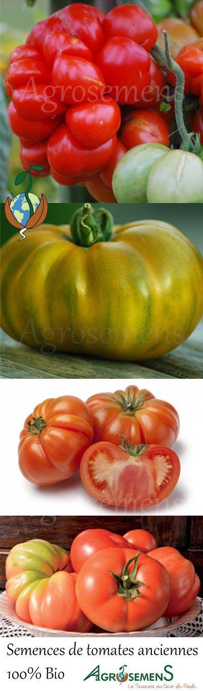Nouveautés 2016 ! Nouvelles variétés de semences de tomates anciennes 100% BIO : Voyage, Evergreen, Potiron écarlate, Reine des hâtives... à semer sous abri dès février.
