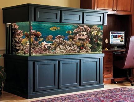 17 best images about Aquariums on Pinterest | Aquarium ...