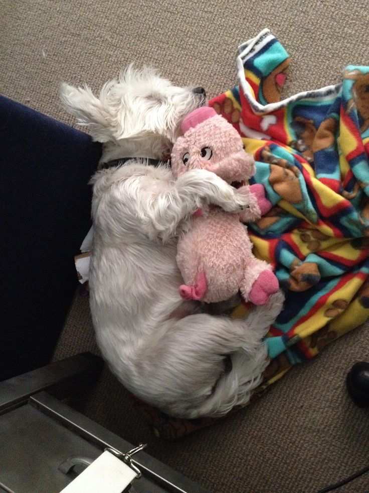 Bernard sleeping with his favourite toy