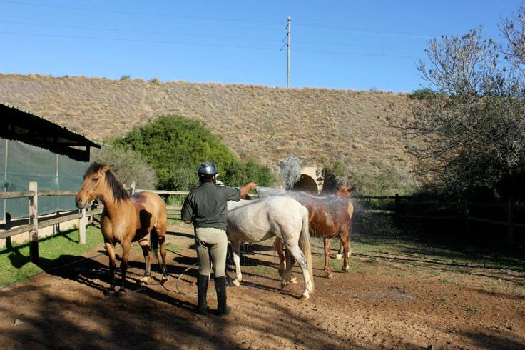 Horse Rehabilitation Project. Bath-time for our stunning rescue horses!