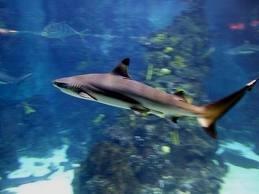 L'Aquarium in Barcelona
