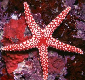 1. Las estrellas de mar tienen ojos