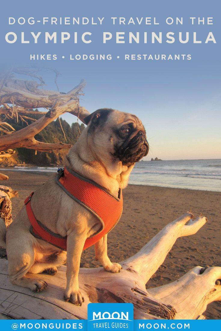 Dog Friendly Travel On The Olympic Peninsula Dog Friends Olympic Peninsula Dog Travel