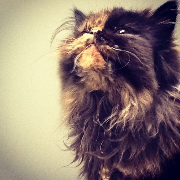 My cat Ágata.   Died a few months ago