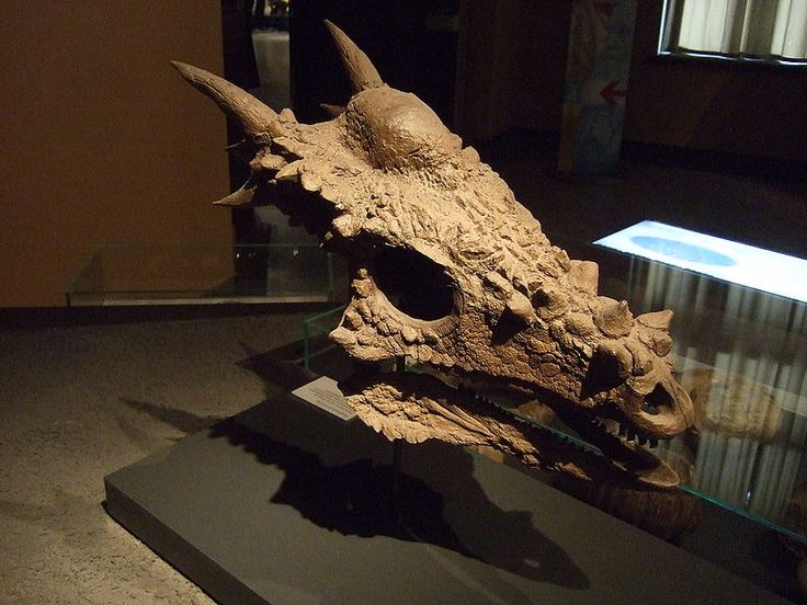"""Dracorex Hogwartsia. In Hell Creek Formation in South Dakota back in 2006 there was a new dinosaur found. As a tribute to the dragon it seemed to look so much like it was names """"Dracorex hogwartsia"""" aka """"Dragon King of Hogwarts"""" J.K. Rowling was extremely touched by the action."""