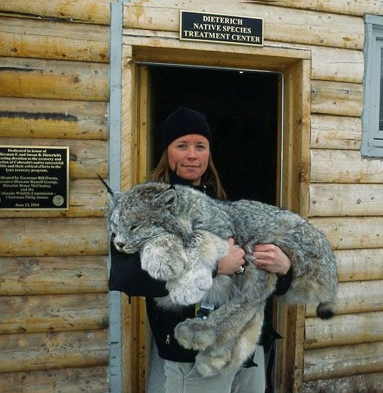 This lynx and it's huge paws - see http://www.classybro.com/ for more!