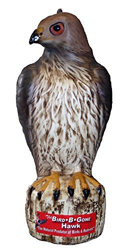 The Bird B Gone Hawk Decoy is the first Red Tailed Hawk Decoy available in today's market and is used the same way as owl decoys to scare birds from open areas. Mock predator eye and shiny reflective ...