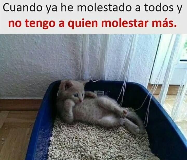 videoswatsapp.com imagenes chistosas videos graciosos memes risas gifs graciosos chistes divertidas humor gato tom http://chistegraficos.tumblr.com/post/167606624766/imagenes-de-risa