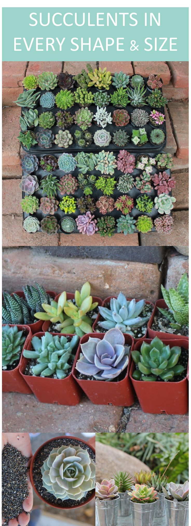 Explore succulent DIY ideas in every shape and size. These ...