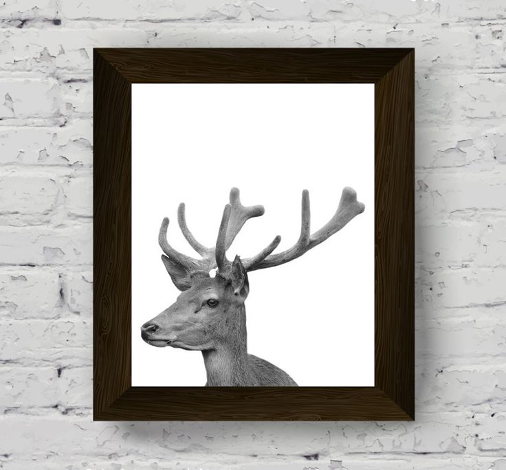 animal print, animal print nursery, deer print, black and white animal, animal photo, deer photography, black and white deer, animal poster di AlemiPrints su Etsy