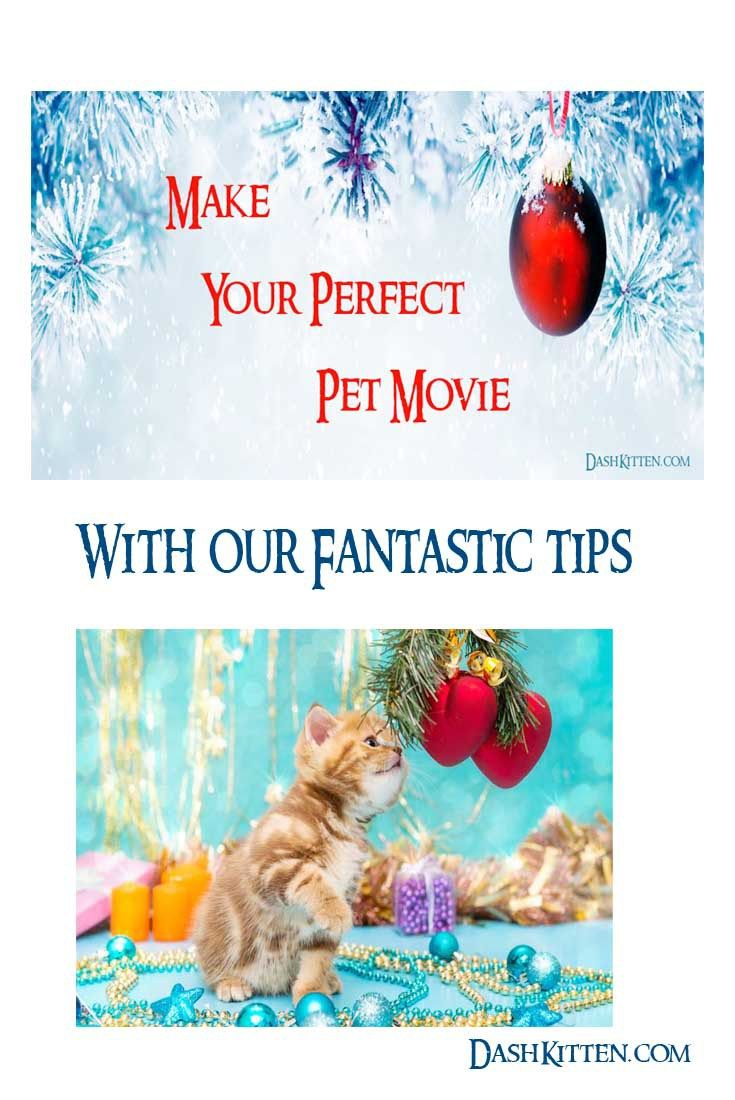 Create Your Own Perfect Pet Movie with our Tips, Tricks and Advice. We tell you where to start, what to do, and the things its good to avoid!