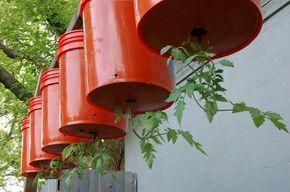 Upside-Down Planters | The Concordia Greenhouse