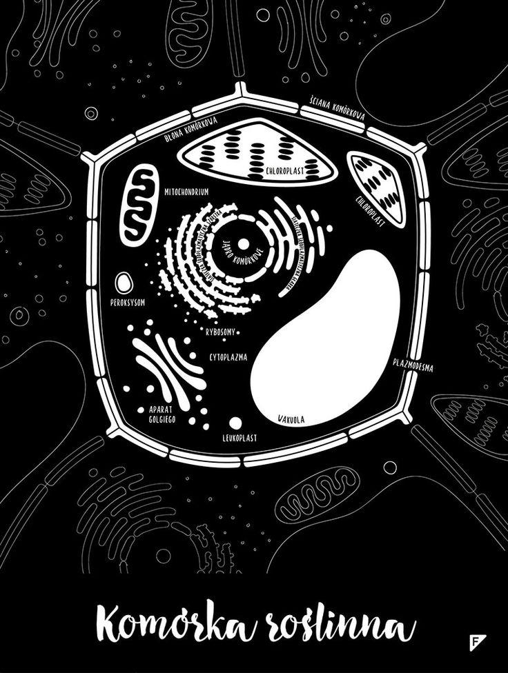 Witajcie Odkrywcy!  W skład Zestawu Małego i Dużego Biologa wchodzą plakaty:  Komórka zwierzęca Komórka roślinna Zestaw dostępny w różnych wersjach językowych. Prosimy o podanie w komentarzu do zamówienia wybranej wersji.  Plakaty zostały wydrukowana na papierze archiwalnym (350 g) w wysokiej jakości 2400dpi - bardzo wyraźny wydruk!  Rozmiar 30 x 40 cm   Każdy plakat jest sygnowany przez projektanta.