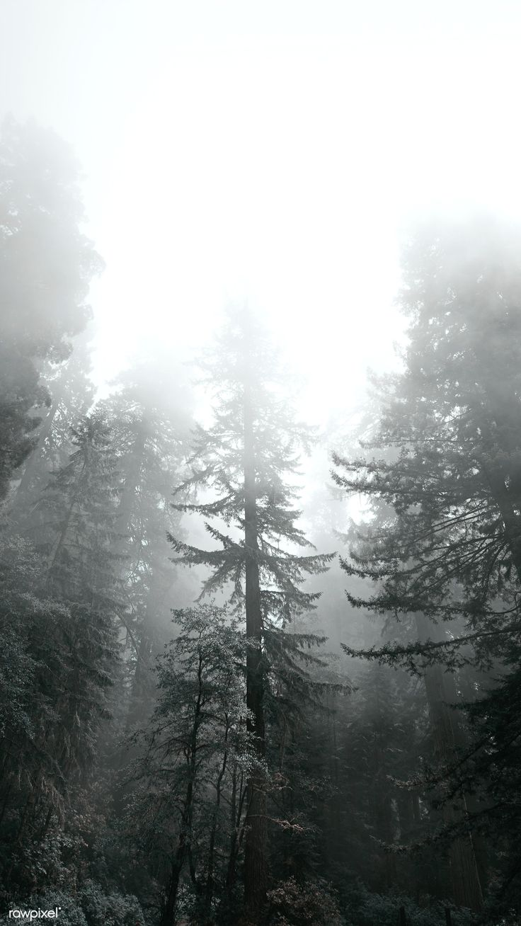 Download premium image of Redwood National Park in a mist, California USA