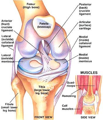 never knew so much about knees till I injured mine!!  ACL  hoffa's tear + femur damage = gah!  2 days post arthroscopic surgery.