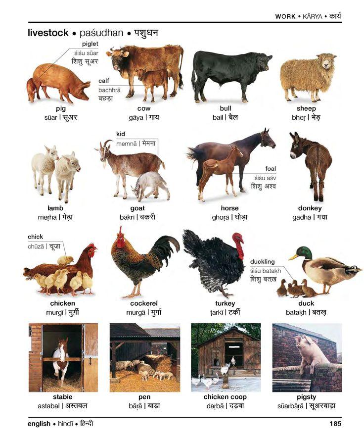 Farm Animals in Hindi Hindi  Universiteit Leiden  Hindi  German language learning Learn
