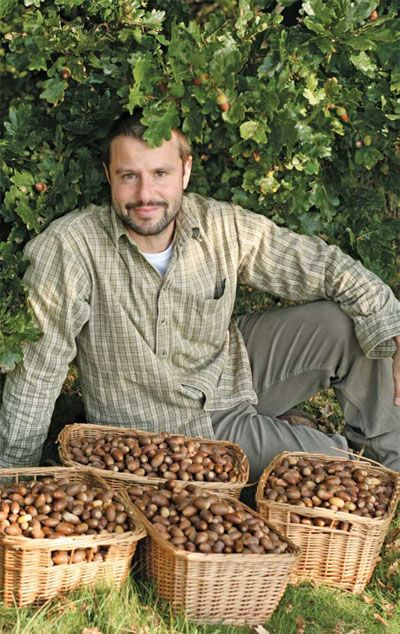 NUT FORAGING - Covers walnuts, beech nuts, hazelnuts, pine nuts, acorns, and chestnuts, with several great recipes: Wild mushroom and soft walnut pate; Nut yoghurt Acorn pastry; Irish style sweet chestnut coffee.